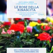 le rose della rinascita